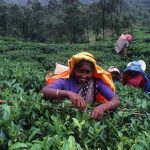 A 30-days visa for Sri Lanka