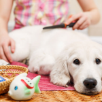 The essential pet supplies for your puppy